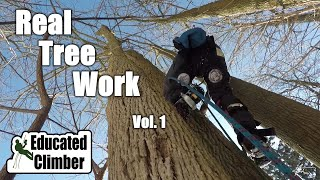 Real Tree Work Vol. 1  |  Climbing and Rigging Dead Ash Trees 2019 | Arborist Adventures