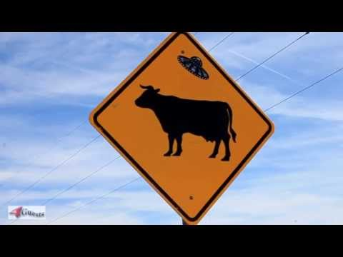 Cattle Abduction by UFO? New Mexico Road Sign