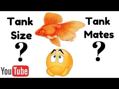 Tank Size & Tank Mates For Goldfish