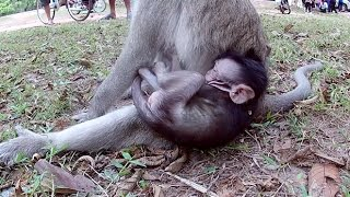 Monkey mom is tired taking care of her baby