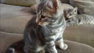 Denver caught making kitty kat treat deal