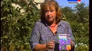 Посадка луковичных. Ирисы. Эремурус. Виды луков:декоративный лук.(, 2014-05-22T17:04:57.000Z)