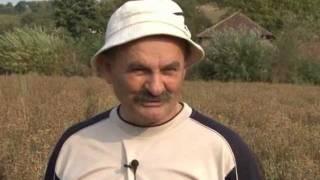 Profit u proizvodnji nevena i uzgoju duvana, STAR 29 - U nasem ataru 400.wmv