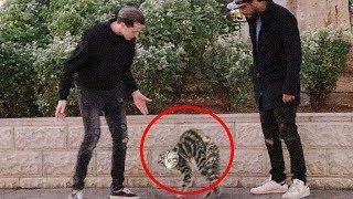 בועטים בחתולי רחוב (ניסוי חברתי)
