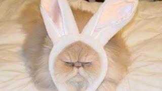 веселые русские коты merry Russian cats