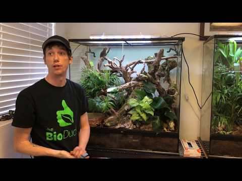 36 x 18 x 36 Exo Terra Bioactive Terrarium build for Chinese Gliding Frogs