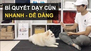 Huấn luyện chó cơ bản BoṡṡDog | Ám hiệu tąy hiệu quả tr๐ng huấn luyện