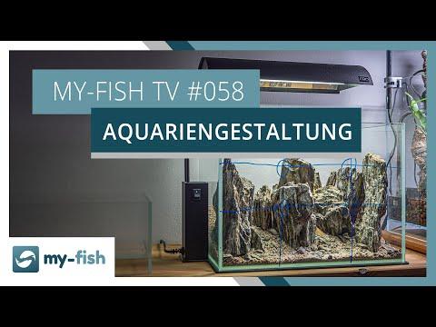 Aquarien ansprechend gestalten mit diesen Grundregeln | my-fish TV #058