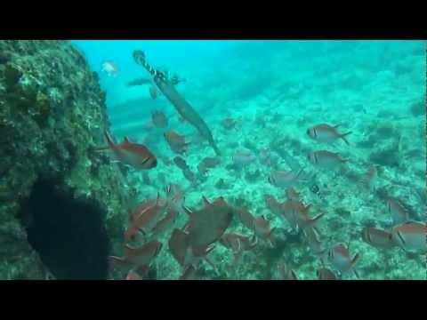 Wyspy Zielonego Przyl�dka, Sal, Nurkowanie, HD, Cabo Verde, Diving, Cape Verde, Kap Verde, Tauchen, Underwater, Unterwasser, podwod�