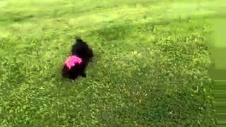 Girl Naced A Dog Pussy