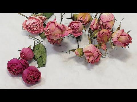 Объемная и плоская  сушка цветов. Как засушить розы.