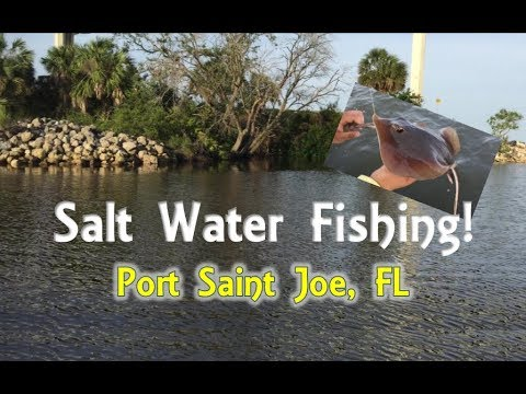 🦀✸★ Fishin In Port St Joe Florida With BONUS 🐬Dolphin Footage!★✸🦀