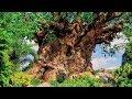 Animal Kingdom Tree Of Life BGM Loop mp3