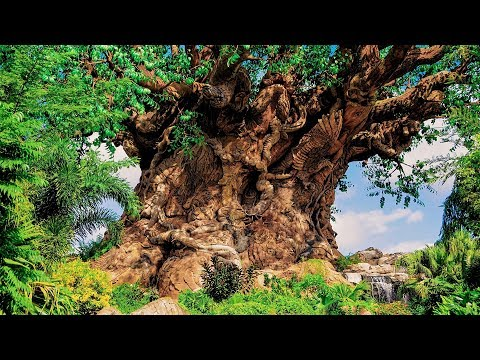 Animal Kingdom | Tree of Life | BGM Loop