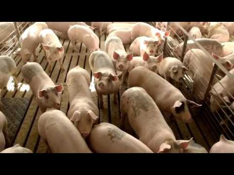 Pipestone System & Jones Family Farm