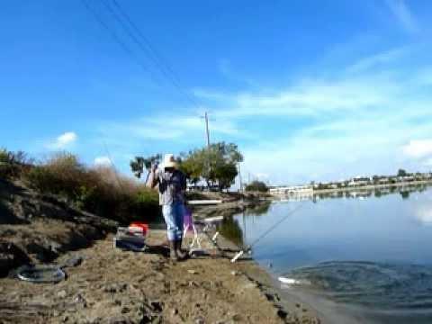 Trout fishing santa ana river lakes youtube for Santa ana river lakes fishing