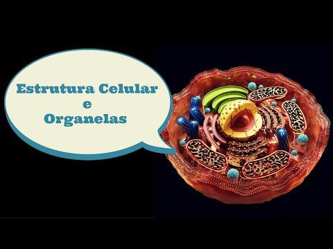 Estrutura Celular Organelas Animação