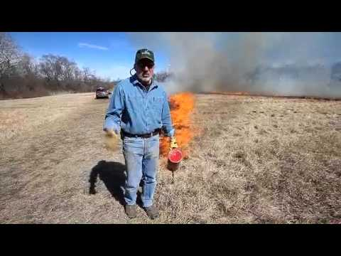 Controlled Burn To Restore Native Grass