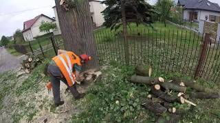 Nie ma Lipy , czyli wycinka drzew przy drodze (Stalowa Wola)