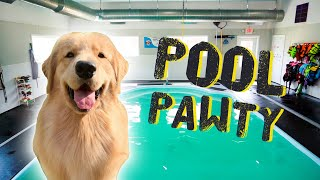 throwing-my-dog-a-pool-party
