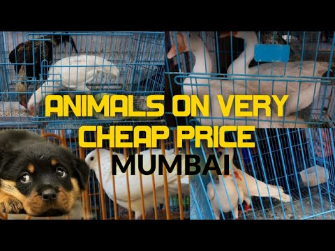 Crawford Market Mumbai   Animal's Verry Cheap Price