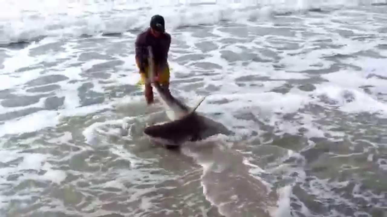 Shark Catch Off Manasota