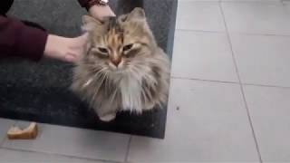 Животные 👍 просто доброе видео!