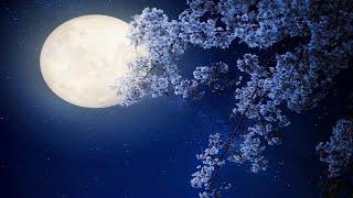 Relaxing Sleep Music: Harp Music, Sleeping, Fall Asleep, Beat Insomnia, Soft, Calm, Soothing ★59