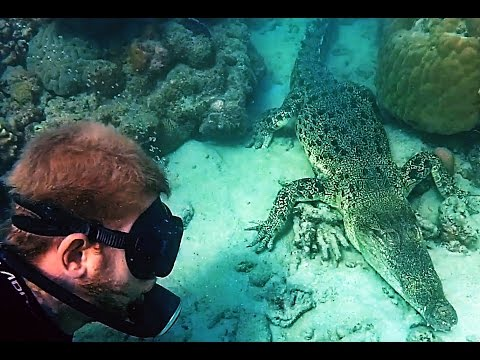 Diving with Crocodiles (Watch in HD)