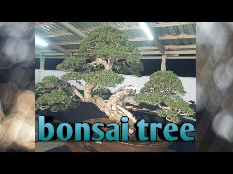 bonsai-exhibition-|-bonsai-philippines-2020-|-beautifull-bonsai-tree-philippines
