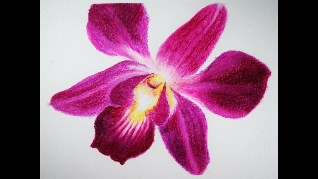 Draw Flower With Oil Pastels Como Dibujar Una Flor