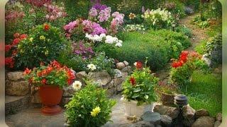 видео Цветник непрерывного цветения из многолетников: полезные советы