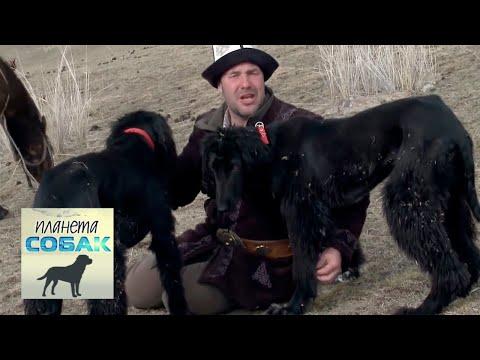 Смотреть Тайган. Планета собак 🌏 Моя Планета онлайн