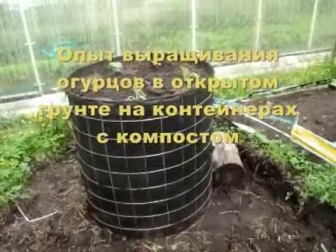 Выращивание огурцов на компосте
