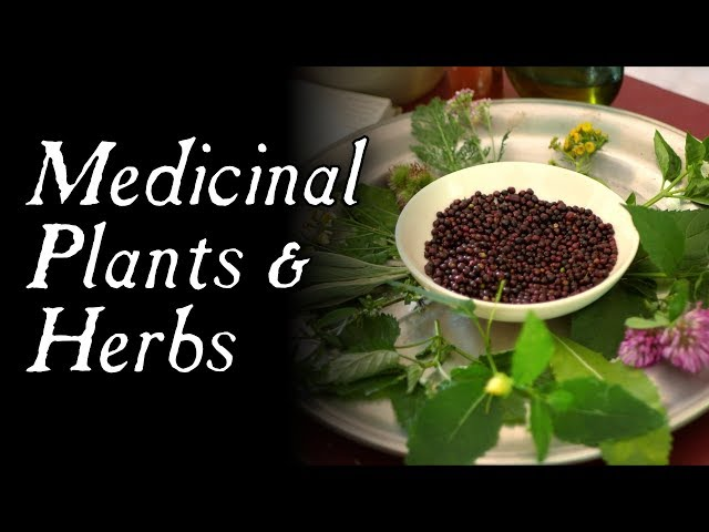 These Plants Could Have Saved You! - Historical Herbal Medicine