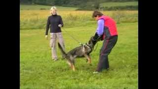 Czech German Shepherd Working Line Female Coca Z Tlustovous Training Protection