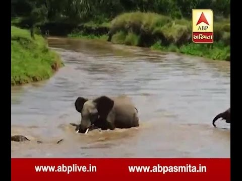 Elephants Save Drowning Baby