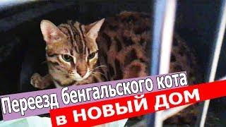 ПЕРЕЕЗД Бенгальского кота ГУСИ, Куна и Пусси