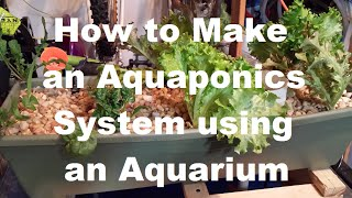 How To Build An Aquaponic System With An Aquarium.