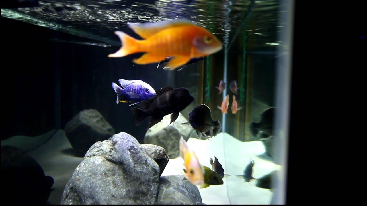 Freshwater Cichlid Aquarium with Marineland Double Bright ...