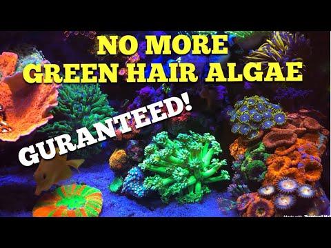 Getting Rid Of Green Hair Algae