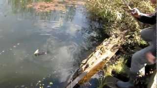 видео ловля щуки на реке ока