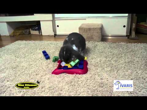 Dog Miracle Puzzle (kunststof) – konijn