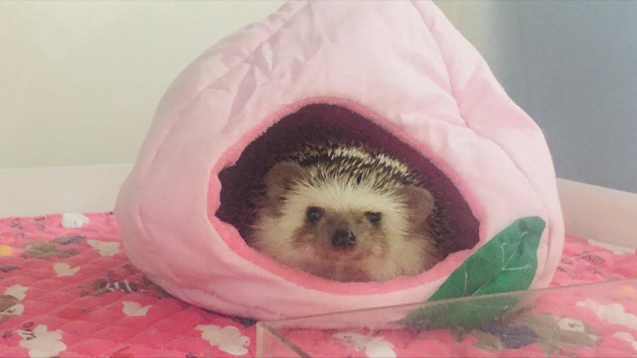 오늘은 고슴도치 목욕하는 날!!