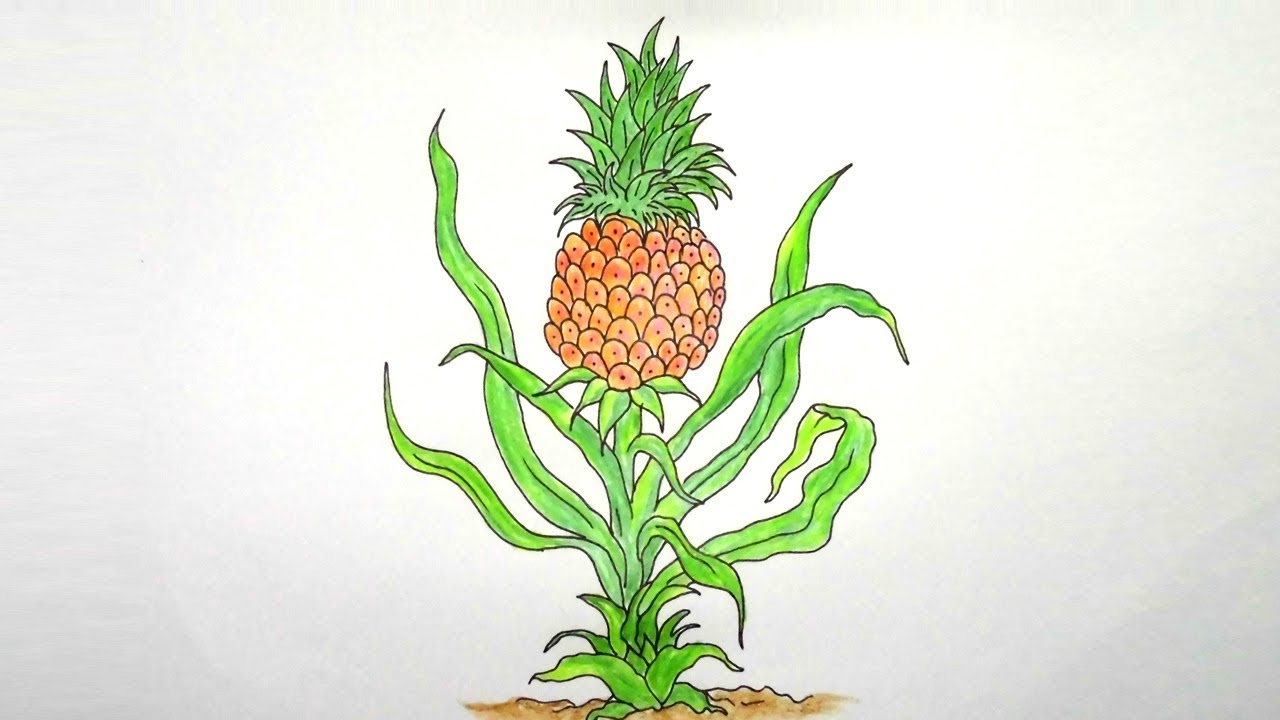 How to Draw Pineapple Tree Step By step ||Very easy ...