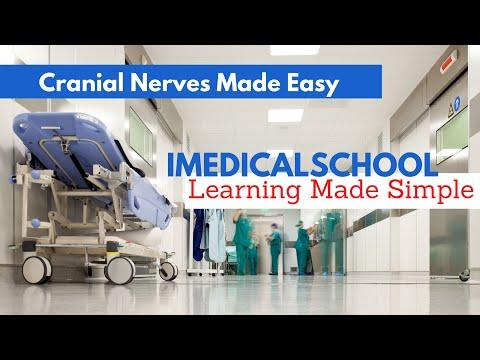 Dr Najeeb Neuroanatomy And Neurophysiology