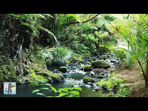 3 HOURS Of Tropical Forest Stream ~ Relaxing River Sounds & Amazing Nature Scenery In 4K Ultra HD