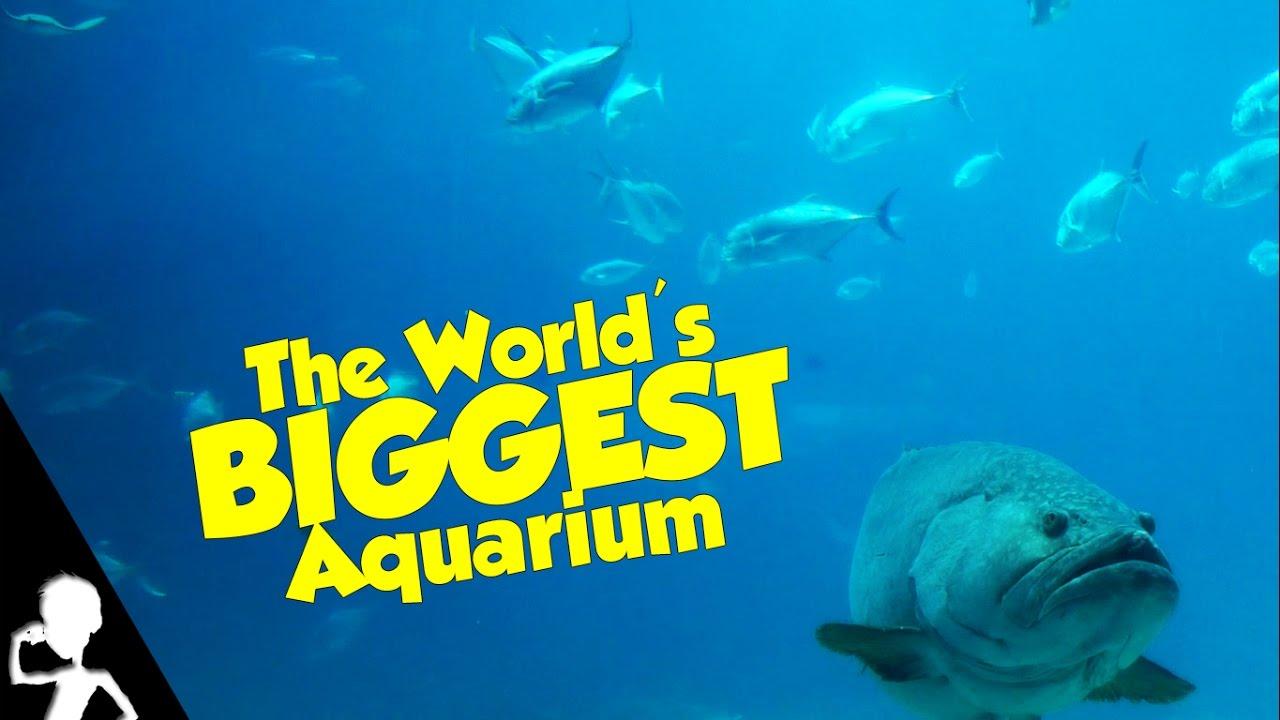 The Biggest Aquarium In The World | The USA Diaries | #157 ...