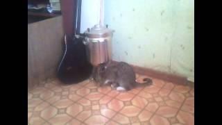 накуренный кот из тмб
