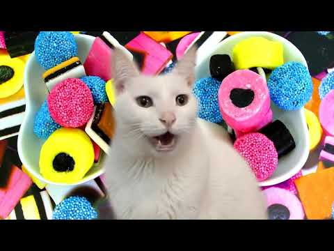 The Gummy Bear Song - Cats Version - I'm a Gummy Bear - Cats Parody